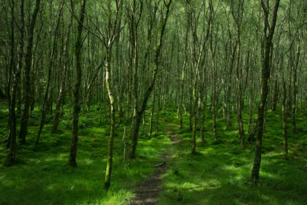 hiking trips in ireland