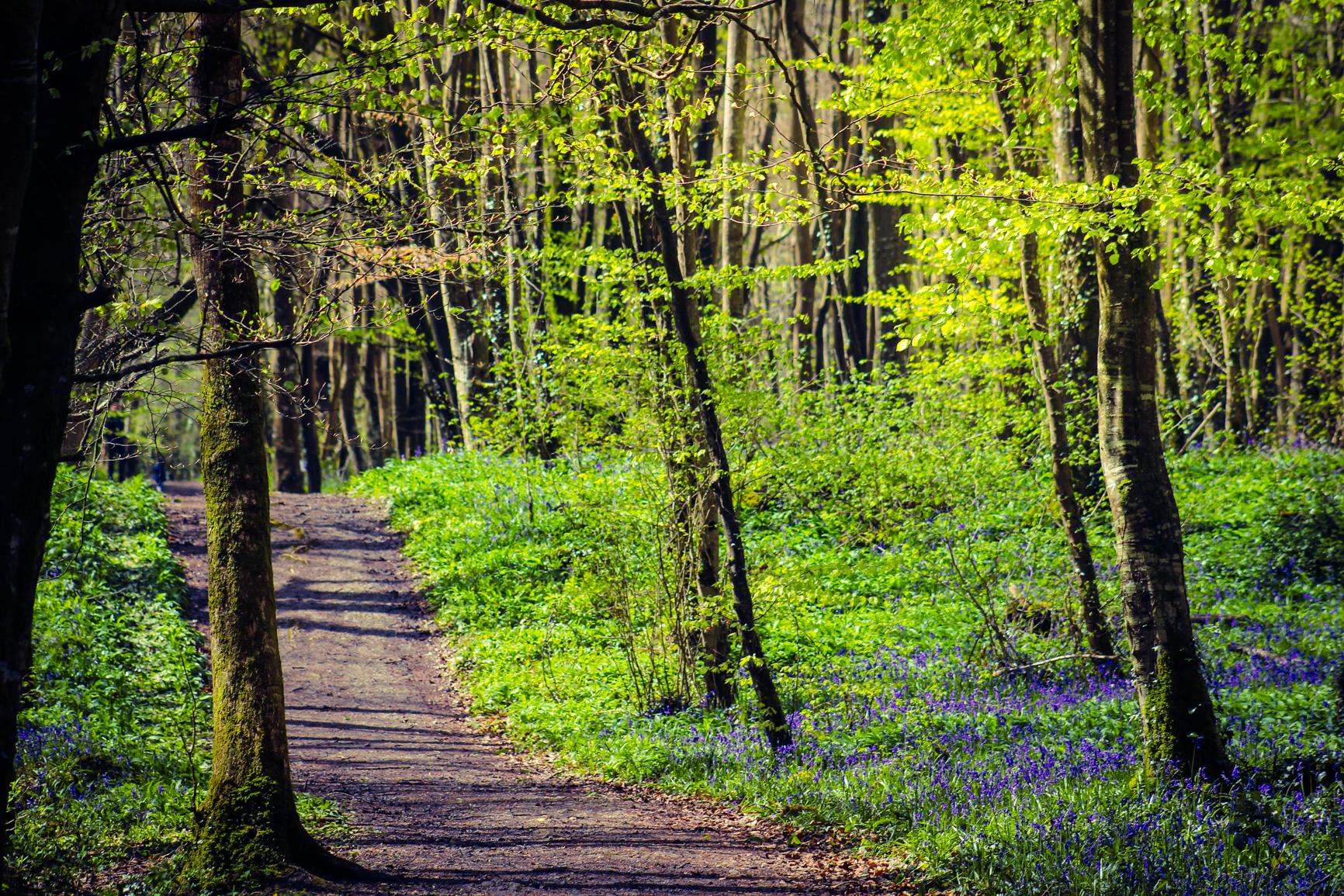 irish-roads-amazing-photo