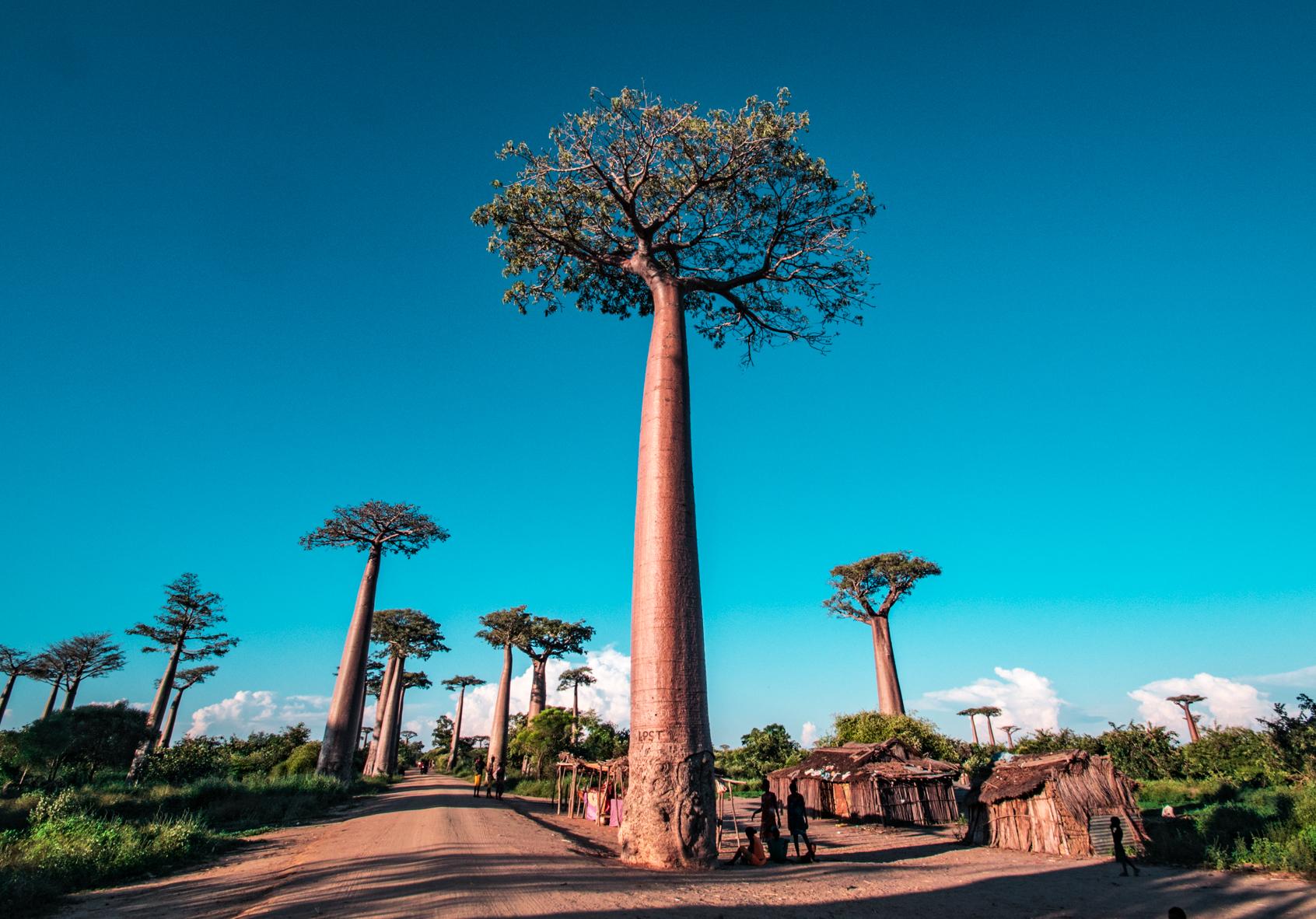 Madagascar | Travel Video